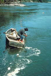 Indian fisherman with gillnet